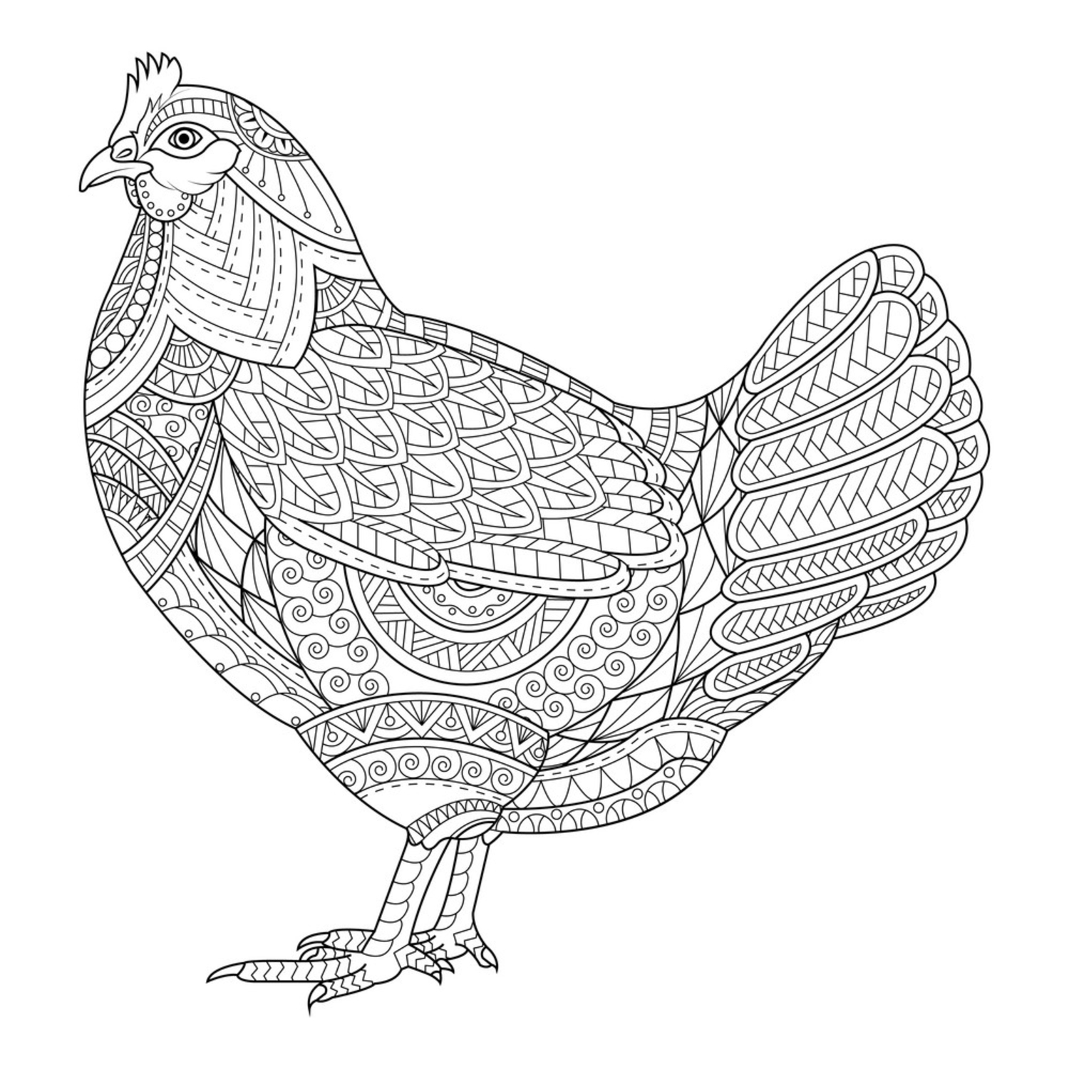 Chicken zentangle stylized for coloring book for vector 16429883