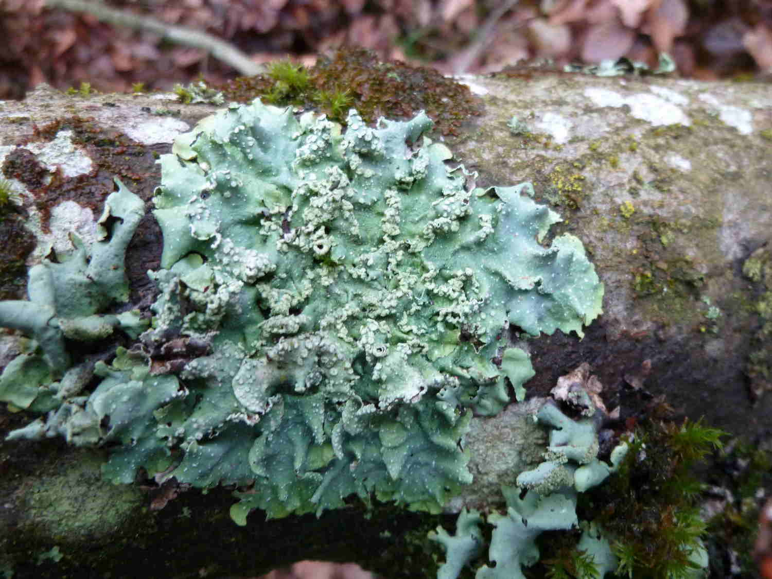 2.%20mosses%20and%20lichens